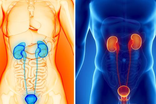 Semiologia Aplicada - II (Sinais e Sintomas do Sistema Geniturinário Masculino e Feminino)