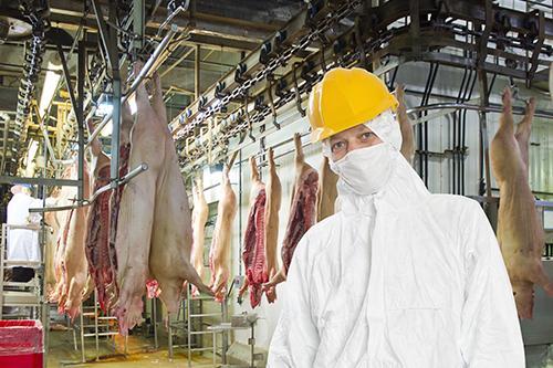 Abate e Industrialização de Suínos - Portaria N◦ 711, de 01 de Novembro de 1995 (MAPA)