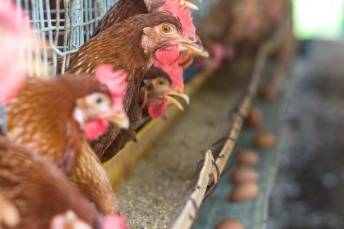 Inspeção Tecnológica e Higiênico - Sanitária de Carnes de Aves Portaria N° 210, de 10 de Novembro de 1998 (MAPA)